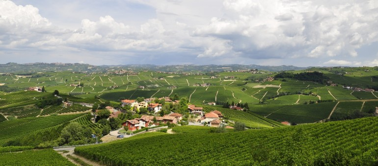 vineyards-3094144_1920